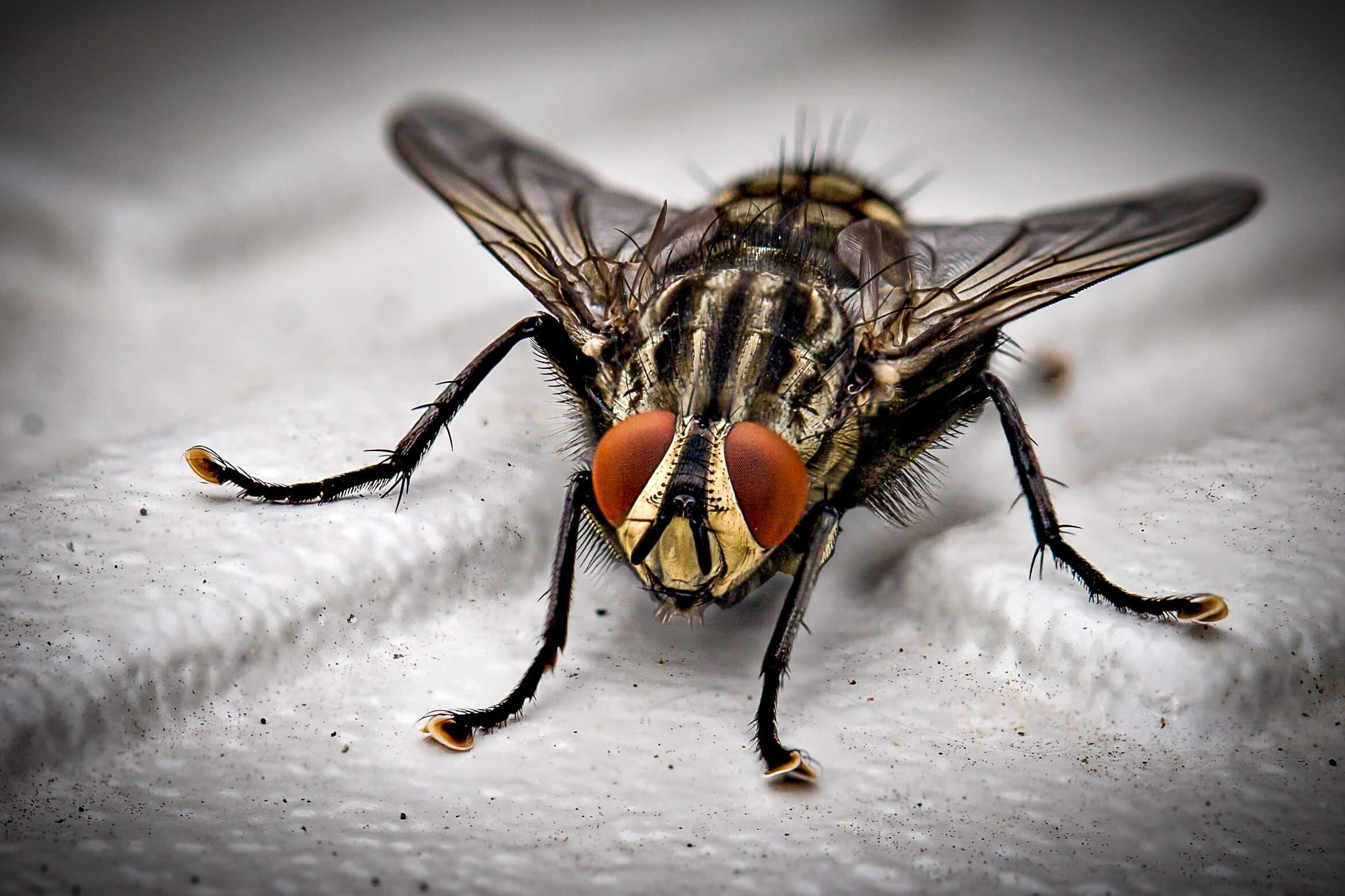 Paraziti protiv alergija i ulceroznog kolitisa