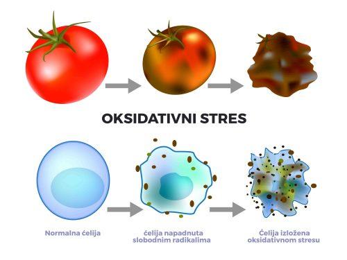 Uticaj oksidativnog stresa i slobodnih radikala na zdravlje odnosno bolest