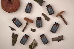 Ekstrakti i čajevi od ljekovitih (medicinskih) gljiva