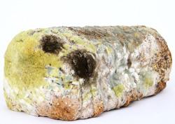 PLijesni kao vrsta gljiva putem koje su otkriveni antibiotici