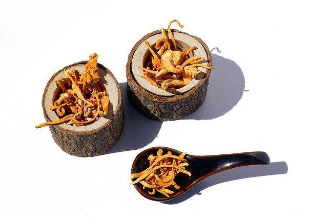 LJekovita (medicinaska) gljiva kordiceps (Cordyceps sinensis